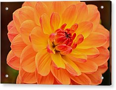 Summer's End Acrylic Print by Kathi Isserman