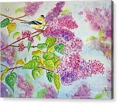 Summertime Arrival II - Goldfinch And Lilacs Acrylic Print by Kathryn Duncan