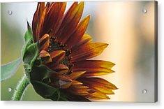 Summertime Sunflower Acrylic Print by Debra Madonna