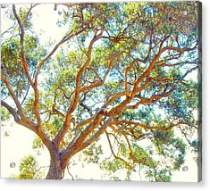 Acrylic Print featuring the photograph Summertime Tree by Jocelyn Friis