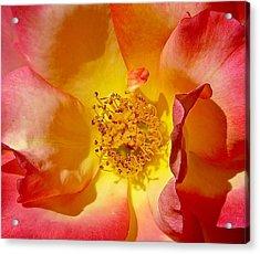 Sun And Flame Acrylic Print