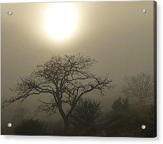 Sun And Fog Acrylic Print