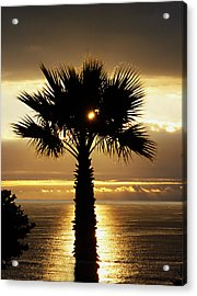 Sun And Palm And Sea Acrylic Print