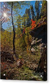 Sun And  The Tree Acrylic Print by Brian Lambert