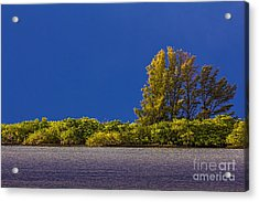 Sun Bathed Acrylic Print by Marvin Spates