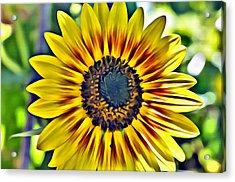 Sun Burst  Acrylic Print