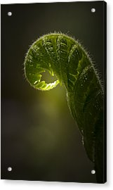 Sun Catcher Acrylic Print