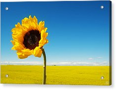 Acrylic Print featuring the photograph Sun Drenched Dreams by Lisa Knechtel