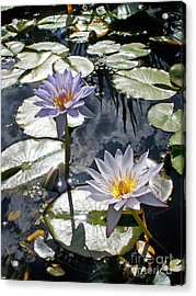 Sun-drenched Lily Pond         Acrylic Print