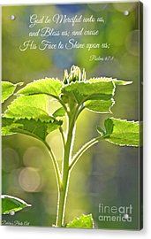 Sun Drenched Sunflower With Bible Verse Acrylic Print by Debbie Portwood