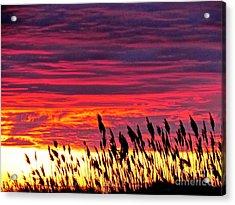 Sun Drifts To Sleep Acrylic Print by Q's House of Art ArtandFinePhotography