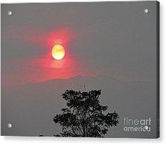 Sun Fire Tree Acrylic Print by Phyllis Kaltenbach