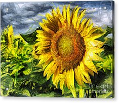 Sunflower Drawing  Acrylic Print