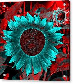 Sun Flower Reverse Acrylic Print