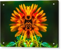 Sun Flower Rising Acrylic Print by Omaste Witkowski