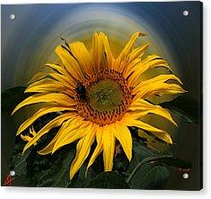 Sun Flower Summer 2014 Acrylic Print