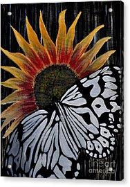 Sun-fly Acrylic Print