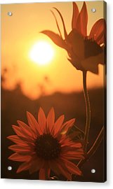 Acrylic Print featuring the photograph Sun Glow by Alicia Knust