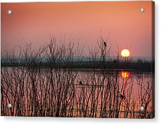 Sun Glowing In A Pink Sky At Sunset Acrylic Print