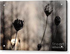 Sun In Darkness Acrylic Print