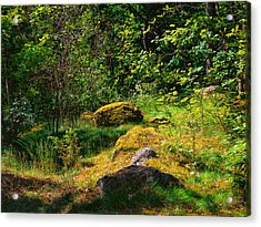 Acrylic Print featuring the photograph Sun In The Forest by Leif Sohlman