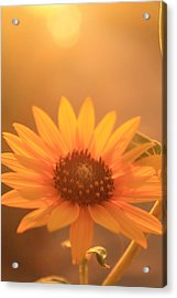 Acrylic Print featuring the photograph Sun Kissed by Alicia Knust