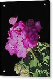 Sun Kissed Geranium  Acrylic Print by Christine Fournier