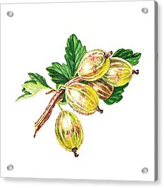 Sun Kissed Gooseberries Branch Acrylic Print by Irina Sztukowski