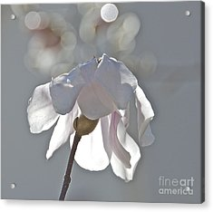 Sun Kissed Magnolia Acrylic Print