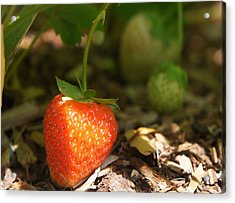Sun Kissed Strawberry Acrylic Print by Kristine Bogdanovich