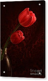 Sun Kissed Tulips Acrylic Print by Darren Fisher