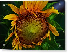 Acrylic Print featuring the photograph Sun Lover by John Harding