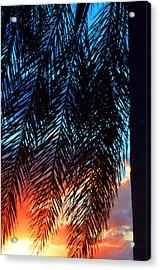 Sun Palm Acrylic Print