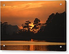 Acrylic Print featuring the photograph Sun Setting In Trees by Bill Swartwout