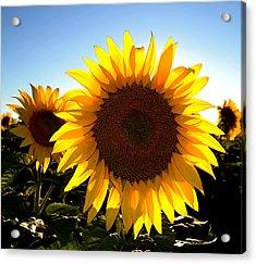 Sun Shine 3 Wc 2  Acrylic Print
