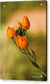 Sun Star Flower Acrylic Print
