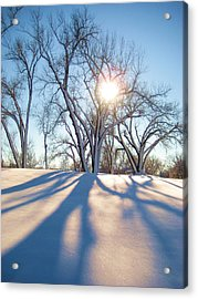 Sun Through Snow Covered Trees Acrylic Print by Alicia Knust