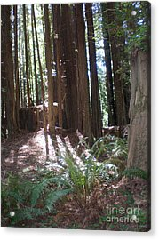 Acrylic Print featuring the photograph Sun Through The Sequoias by Suzanne McKay