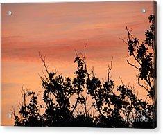 Sun Up Silhouette Acrylic Print by Joy Hardee