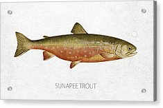 Sunapee Trout Acrylic Print by Aged Pixel