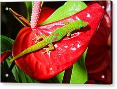 Sunbathing Gecko Acrylic Print