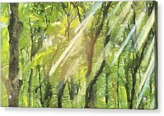 Sunbeams In The Forest Acrylic Print