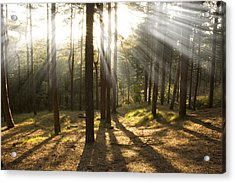 Sunbeams Through The Trees Acrylic Print by Paul Madden