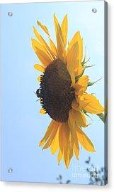 Sunbee Acrylic Print by Lotus