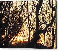 Acrylic Print featuring the photograph Sunblaze-3  by Melissa Stoudt