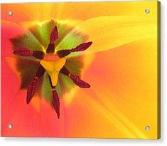 Sunburst 2 Acrylic Print