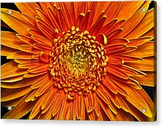 Acrylic Print featuring the photograph Sunburst by Art Barker