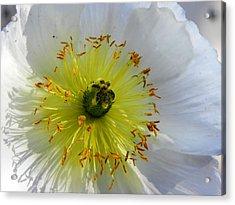 Acrylic Print featuring the photograph Sunburst by Deb Halloran