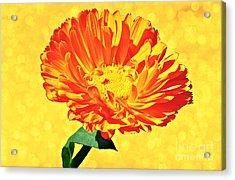 Sunburst Acrylic Print by Elizabeth Winter