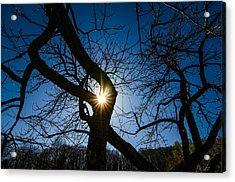 Sunburst In The Orchard Acrylic Print